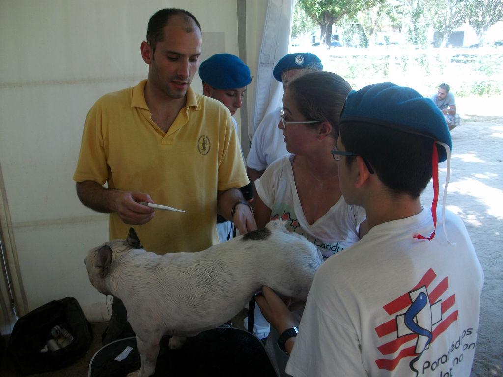 Apoio medico na  prevenção canina