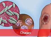 1.10.4.1-chagas