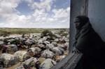 """""""Emergência na Nigéria no combate à cólera"""""""